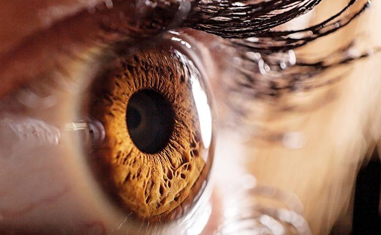 Das Auge - Aufbau und Funktion