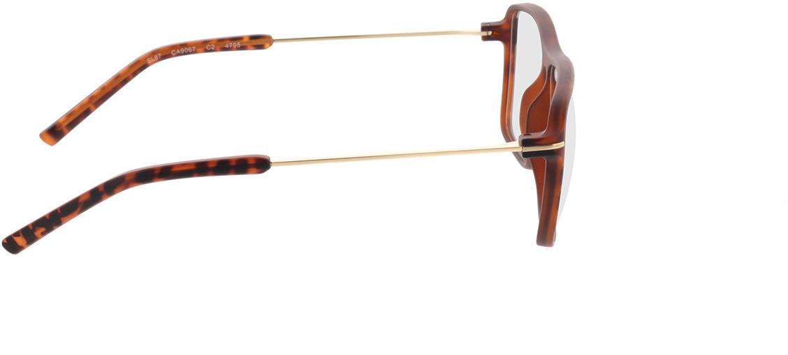 Picture of glasses model Watts castanho/mosqueado/dourado in angle 90